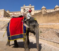 jaipur amber fort elephant ride qpr